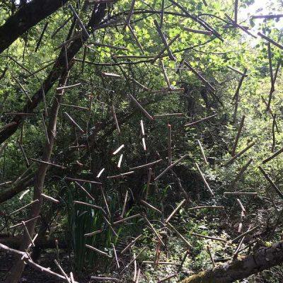 paysage-bois